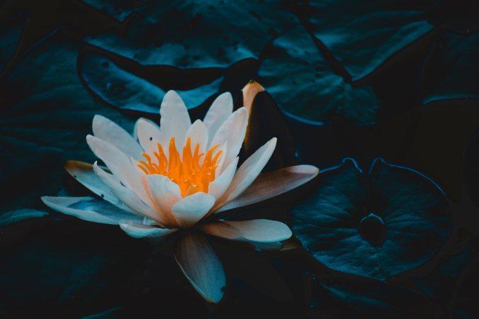 aquatic-aquatic-plant-beautiful-1129382 (1)
